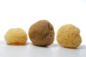 Silk Fine Mediterranean sponges (natural color & bleached)