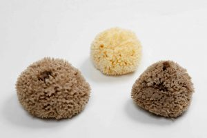 Wool Carribean Sponge (natural color & bleached)